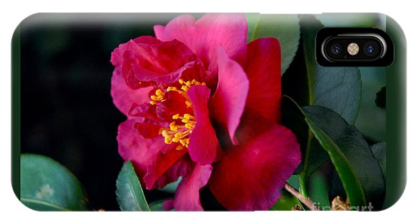 Christmas Camellia IPhone Case