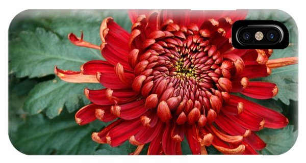 Christmas Chrysanthemum IPhone Case