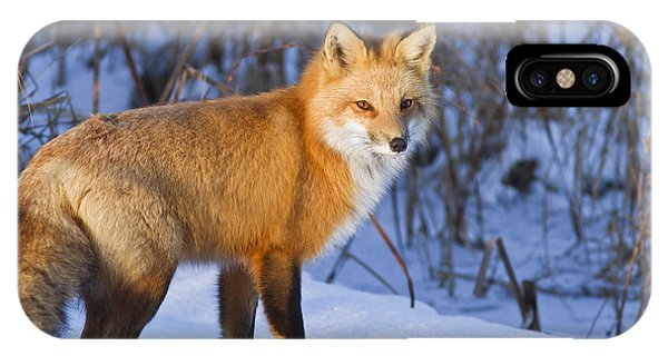 Moustache iPhone Case - Christmas Fox by Mircea Costina Photography