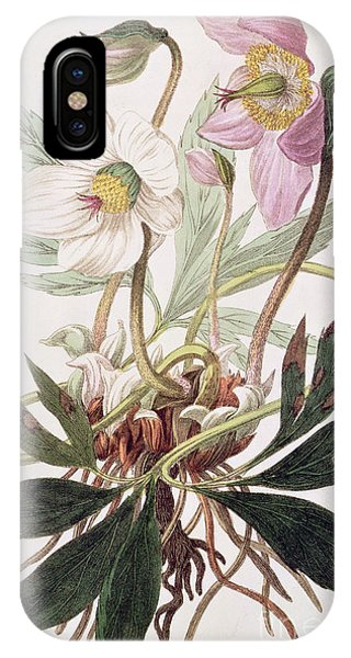 Flora iPhone Case - Christmas Rose by William Clark
