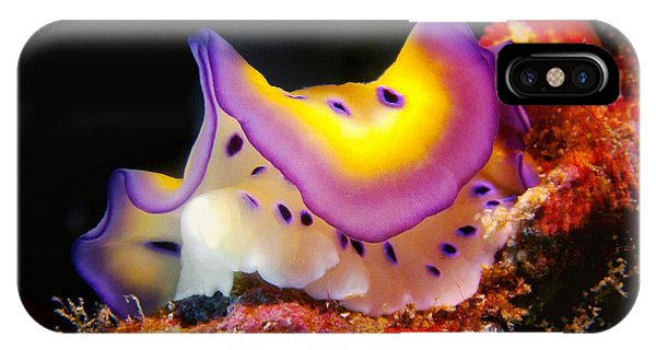 Chromodoris Kunei Nudibranch  IPhone Case