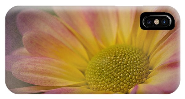 Chrysanthemum 3 IPhone Case