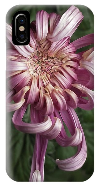 Chrysanthemum 'jefferson Park' IPhone Case
