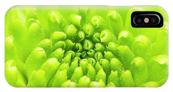 Chrysanthemum Macro IPhone Case