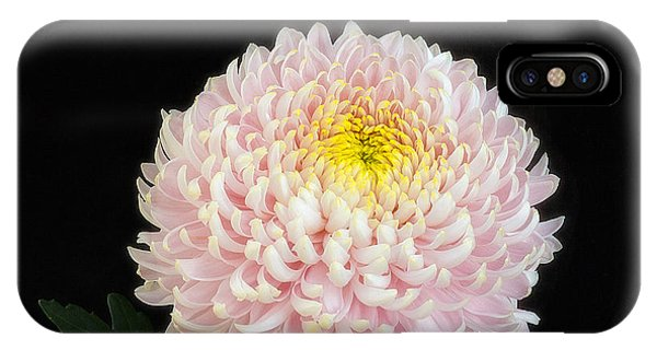 Chrysanthemum 'otome Pink' IPhone Case
