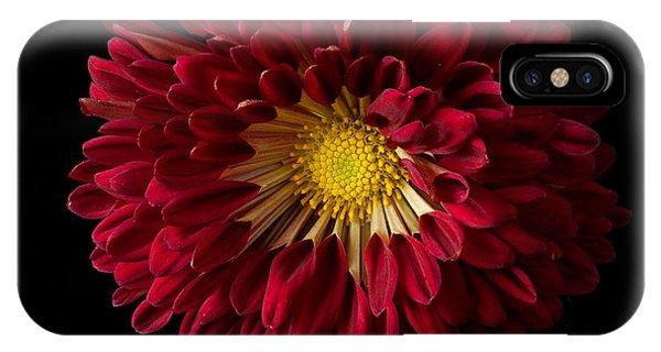 Chrysanthemum 'red Wing' IPhone Case