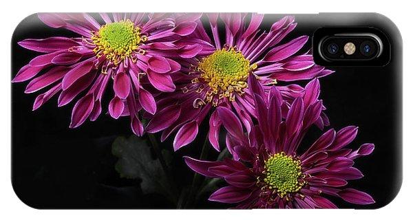 Chrysanthemum 'saba' IPhone Case