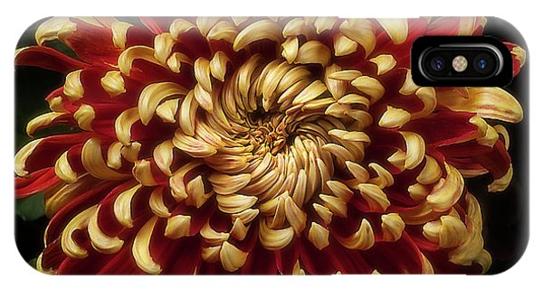 Chrysanthemum 'st Tropez' IPhone Case