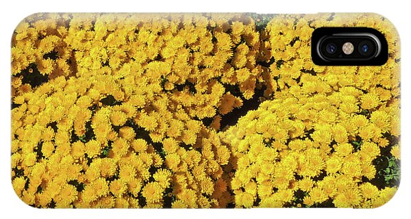 Chrysanthemums At Cheekwood Gardens IPhone Case