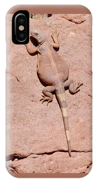 IPhone Case featuring the photograph Chuckwalla, Saurolamus Ater by Breck Bartholomew