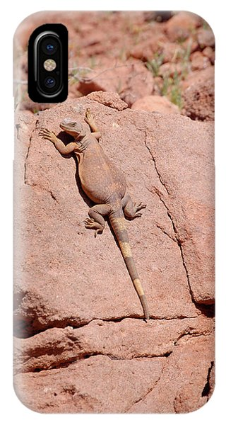 IPhone Case featuring the photograph Chuckwalla, Sauromalus Ater by Breck Bartholomew