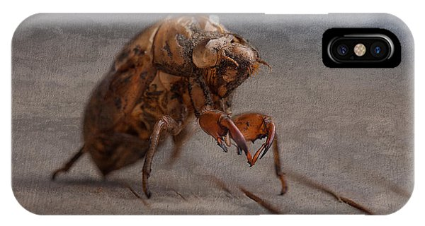 Insects iPhone Case - Cicada Shell by Tom Mc Nemar