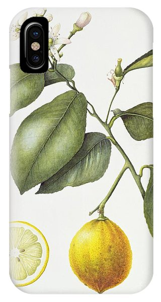 Citrus Bergamot IPhone Case