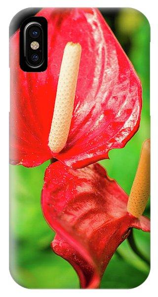 City Garden Flowers IPhone Case