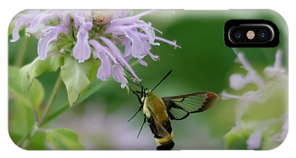 Clearwing Moth IPhone Case