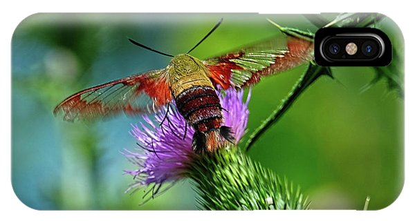 Clearwing Hummingbird Moth IPhone Case