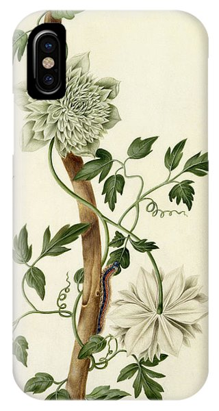 Caterpillar iPhone Case - Clematis Florida With Butterfly And Caterpillar by Matilda Conyers