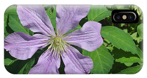 Clematis With Lady Bug IPhone Case