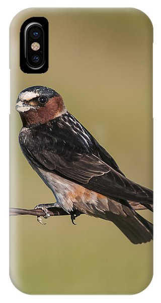 Cliff Swallow IPhone Case
