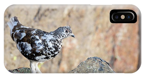 IPhone Case featuring the photograph Cliffside Ptarmigan by Tim Newton
