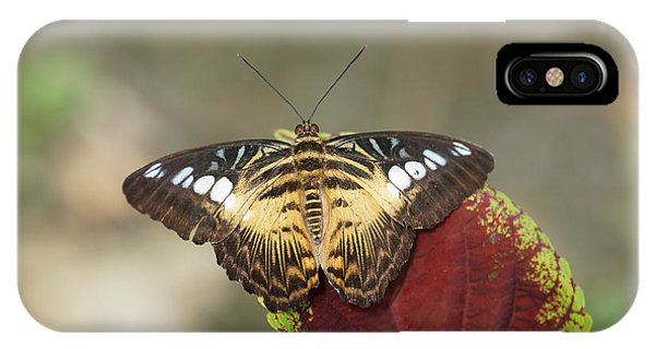 IPhone Case featuring the photograph Clipper Butterfly by Paul Gulliver