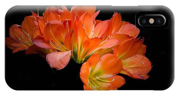 Clivia Flora IPhone Case