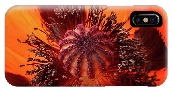 Close-up Bud Of A Red Poppy Flower IPhone Case