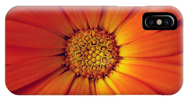 Close Up Of An Orange Daisy IPhone Case