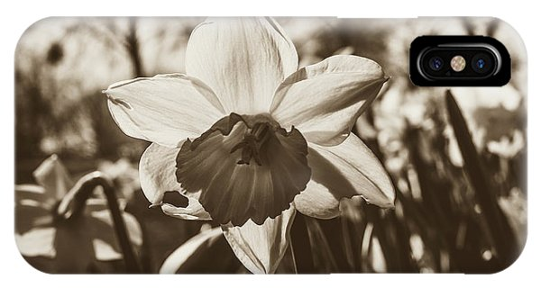 IPhone Case featuring the photograph Close Up Of Daffodil Flower by Jacek Wojnarowski