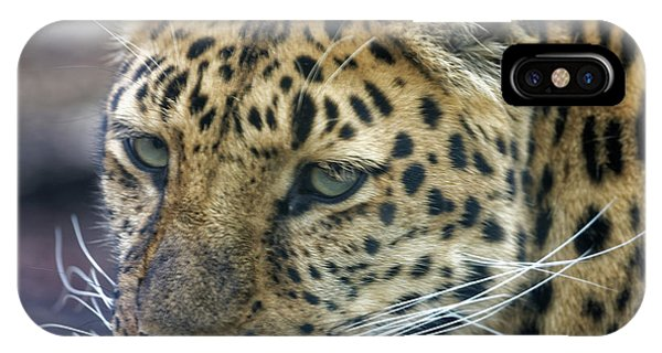 Close Up Of Leopard IPhone Case