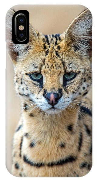 Close-up Of Serval Leptailurus Serval IPhone Case