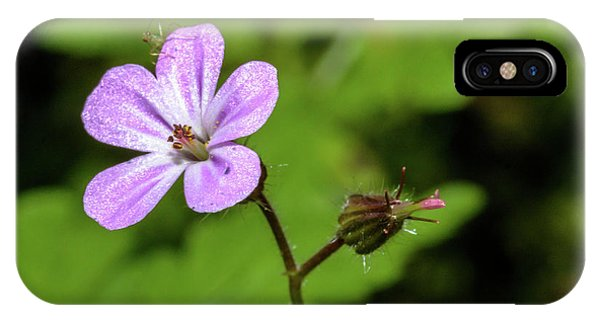 Close Up Of Shining Cranesbill A IPhone Case