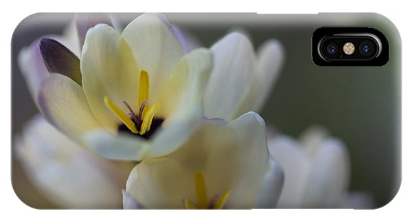 Close-up Of White Freesia IPhone Case