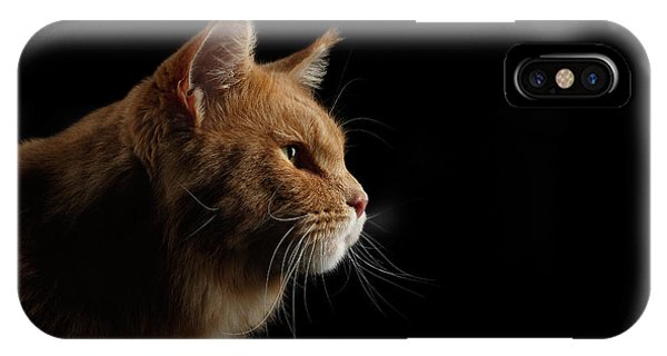 Close-up Portrait Ginger Maine Coon Cat Isolated On Black Background IPhone Case