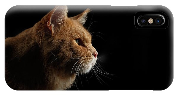 Cat iPhone X Case - Close-up Portrait Ginger Maine Coon Cat Isolated On Black Background by Sergey Taran