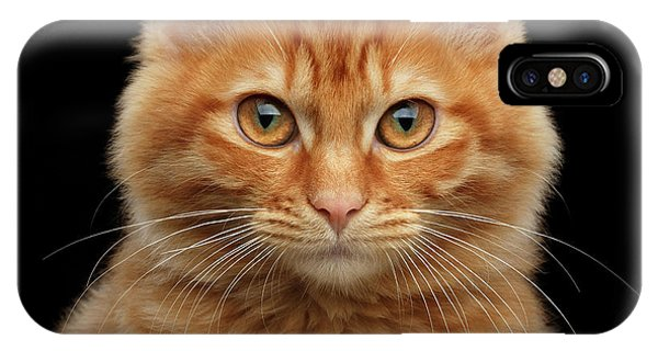 Close-up Portrait Of Ginger Kitty On Black IPhone Case