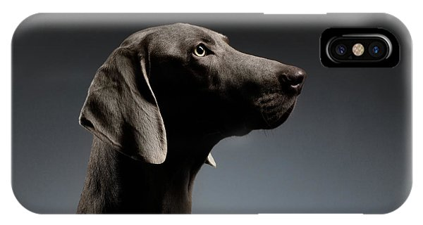 Dog iPhone X Case - Close-up Portrait Weimaraner Dog In Profile View On White Gradient by Sergey Taran