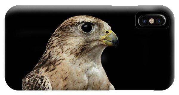 Close-up Saker Falcon, Falco Cherrug, Isolated On Black Background IPhone Case