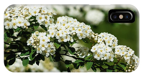 IPhone Case featuring the photograph Close-up White Spirea Bush by Cristina Stefan
