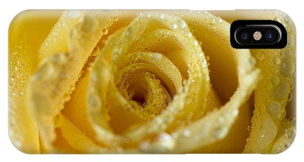 Close Up Yellow Rose IPhone Case