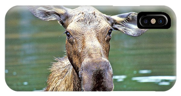 Close Wet Moose IPhone Case