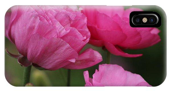 Closeup Deep Peony Pink Ranunculus IPhone Case