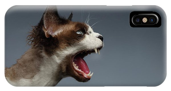 Cat iPhone X / XS Case - Closeup Devon Rex Hisses In Profile View On Gray  by Sergey Taran