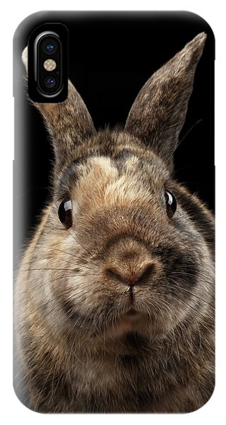 Closeup Funny Little Rabbit, Brown Fur, Isolated On Black Backgr IPhone Case