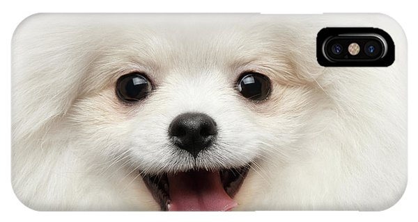 Closeup Furry Happiness White Pomeranian Spitz Dog Curious Smiling IPhone Case
