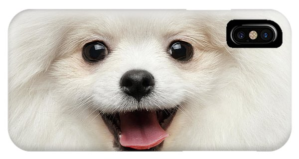 Closeup Furry Happiness White Pomeranian Spitz Dog Curious Smiling IPhone Case