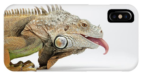 Closeup Green Iguana Showing Tongue On White IPhone Case