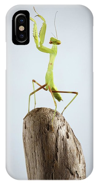 Closeup Green Praying Mantis On Stick IPhone Case