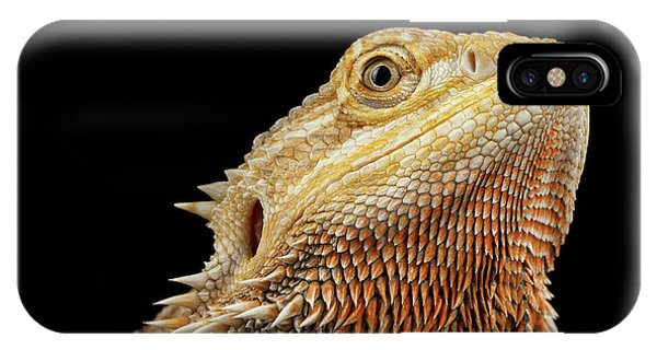 Closeup Head Of Bearded Dragon Llizard, Agama, Isolated Black Background IPhone Case