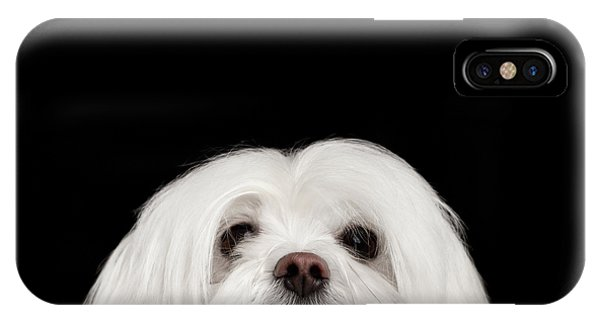 Dog iPhone X Case - Closeup Nosey White Maltese Dog Looking In Camera Isolated On Black Background by Sergey Taran